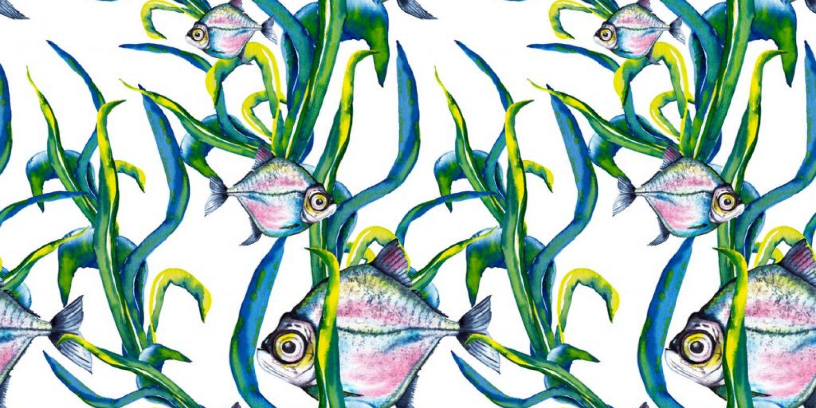 Kelp Marine Biodiversity