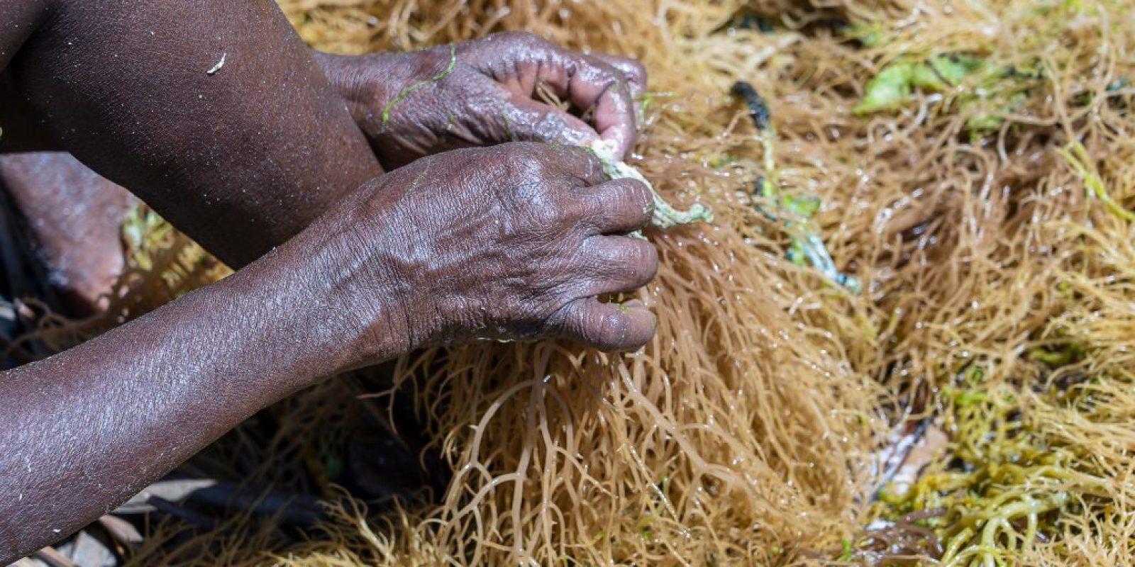 Seaweed farming creates jobs and imporves livelihood